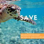 Save the Sea Turtles: How a Caribbean Resort is Making a Major Difference