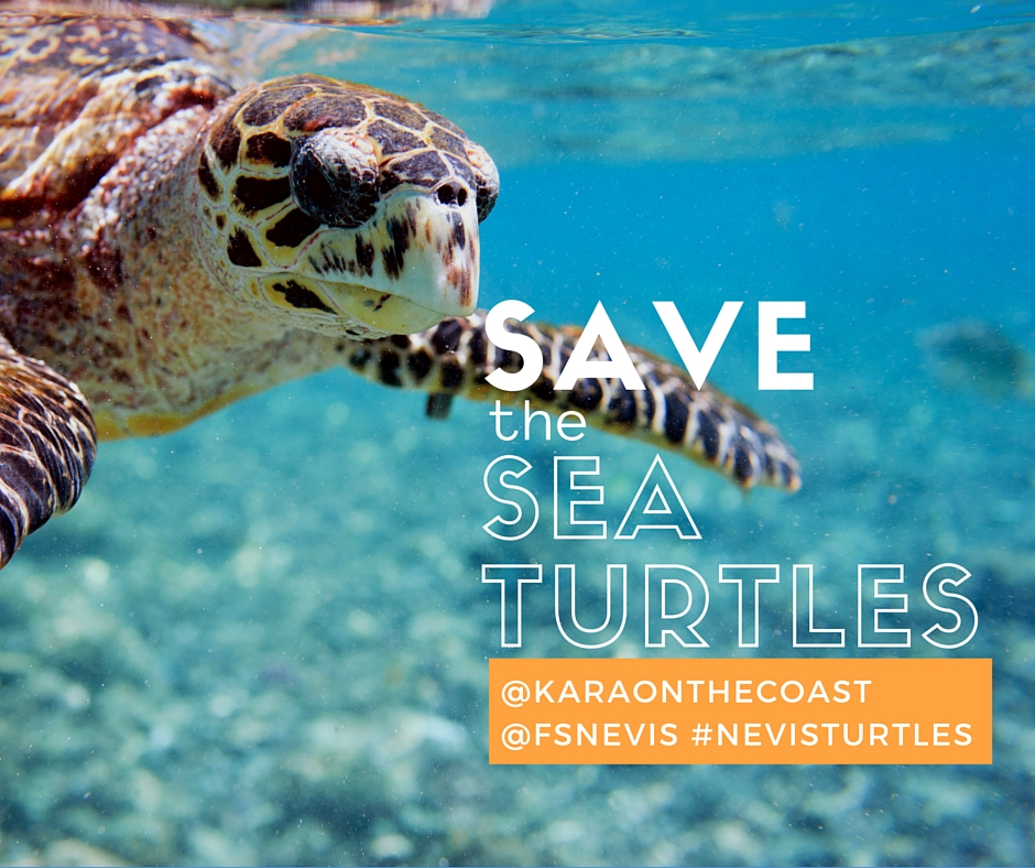 best place to see sea turtles in caribbean best place to visit 2018