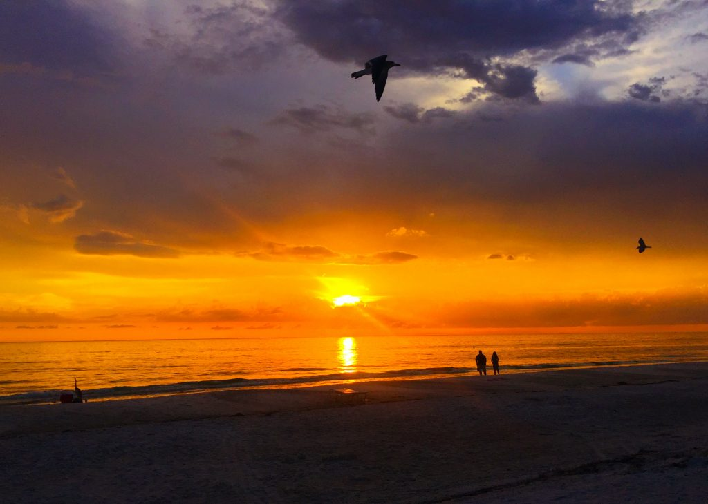 Bird at Sunset on Anna Maria Island by Kara Franker