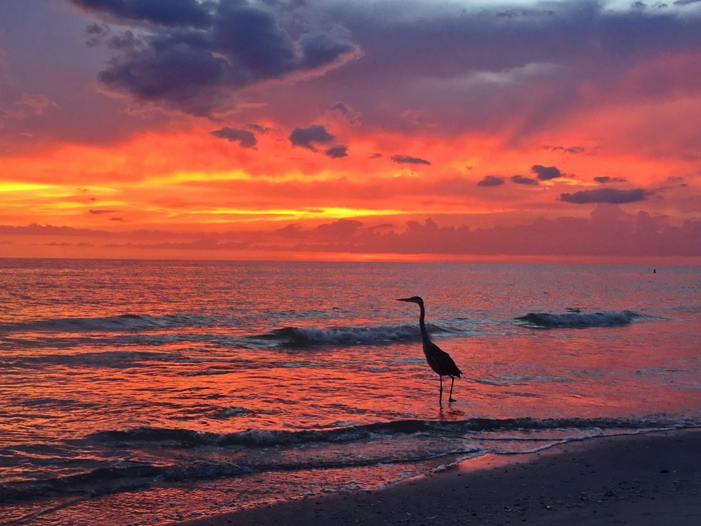 Bird Sunset on Anna Maria Island by Kara Franker