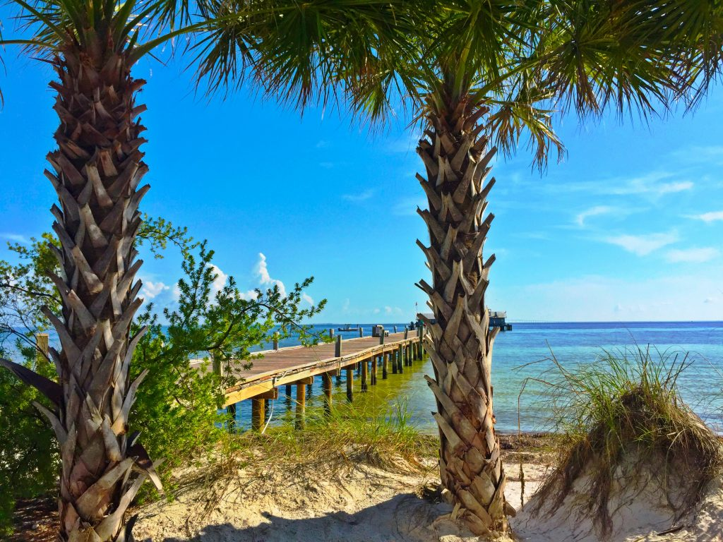 Palm Tree on Anna Maria Island