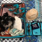 Super Cute Dog in a Suitcase + a Giveaway (of the luggage, not the puppy!)